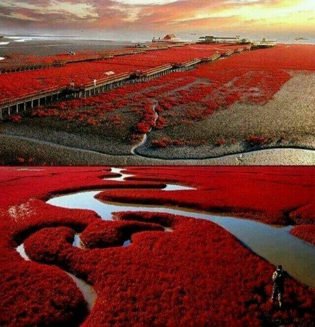 Panjin rwd beach- China