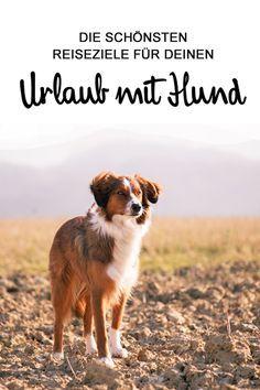 Du Willst In Den Urlaub Aber Dein Kumpel Darf Nicht Fehlen Hier Haben Wir Die Schonsten Reiseziele Fur Dich Und Urlaub Mit Hund Urlaub Hund Reisen
