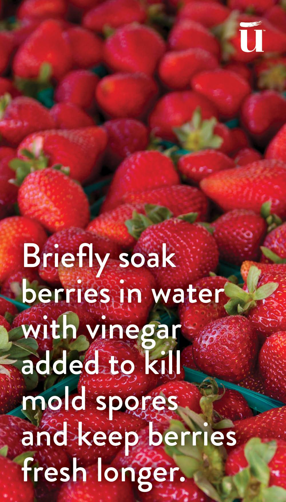 Briefly soak berries in water with vinegar added to kill mold spores