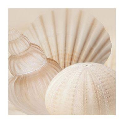 ''Shells Iii'' by Jan Lens Kunst Graphics Art Print