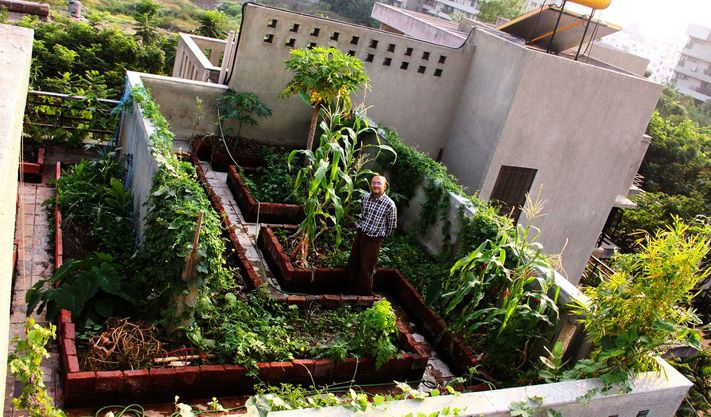Pune terrace garden balcony terrace and wall for Terrace vegetable garden by harikumar