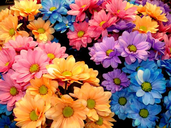Beautiful flowers in different colours