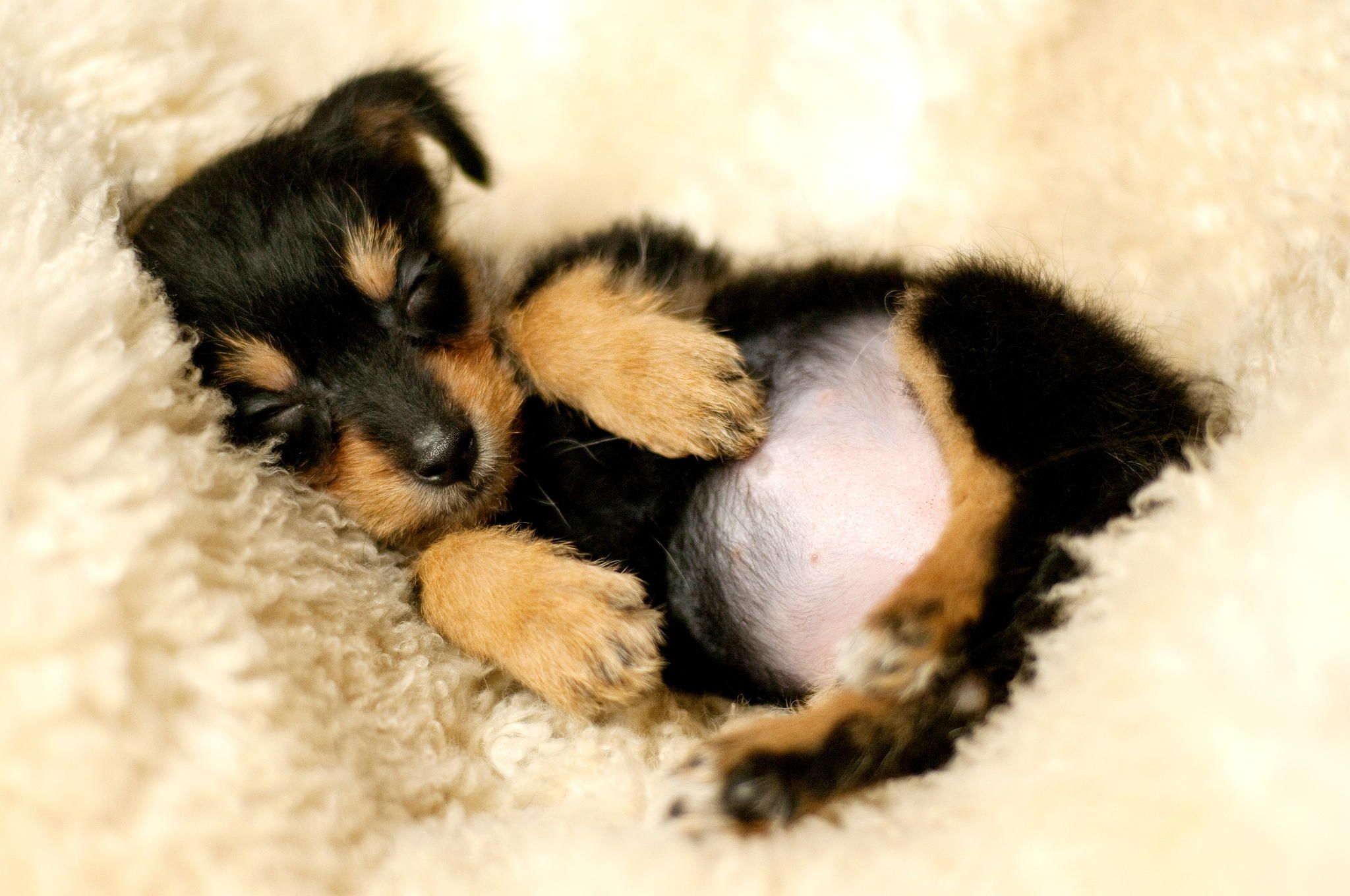 Nice Dreaming By Marion Schoening On 500px Puppy Backgrounds Cute Puppies Dog Wallpaper