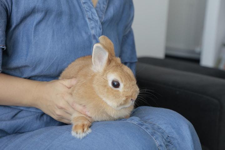 マンションリノベ事例 ウサギも快適な住まい 秘密は回遊できる間取りとカーペット Sumai 日刊住まい ペット用品 ウサギ ペット
