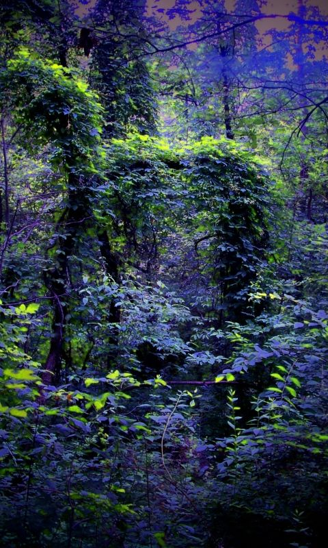 480x800 Wallpaper night, forest, nature