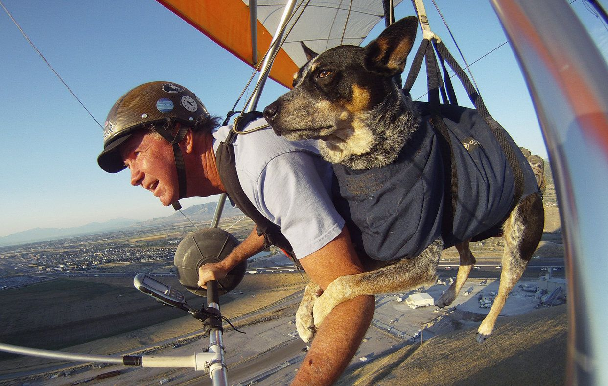 Flying with man's best friend Flying dog, Dogs, Service dogs