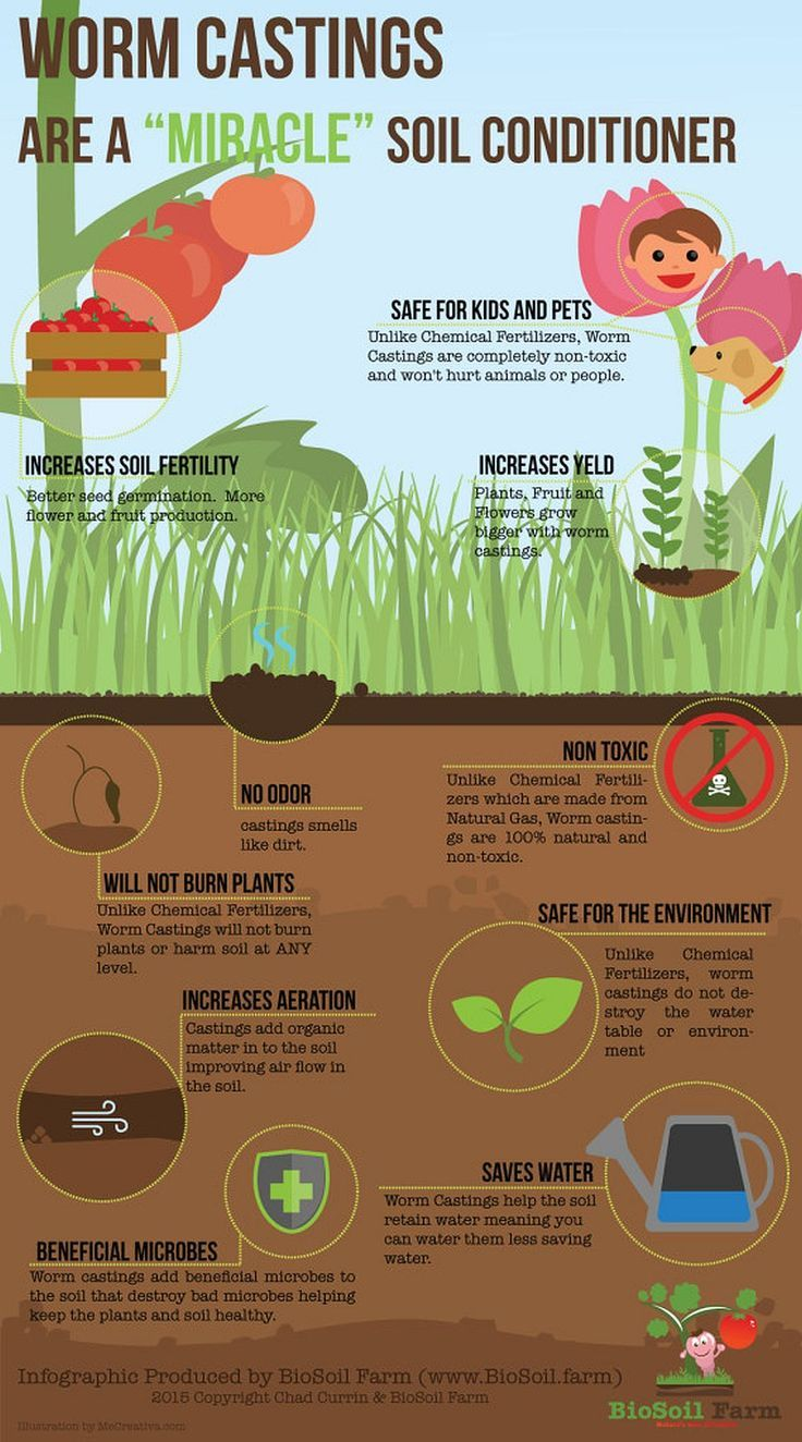 The Essential Benefits Of Worm Farming | Homesteading For Beginners ...