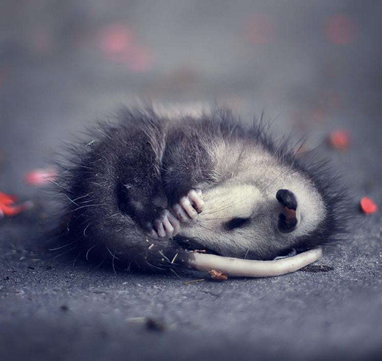Quite cute actually....