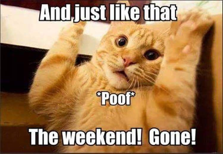 Noticing Tomorrow Is Monday Funny Cat Memes Funny Animal Pictures