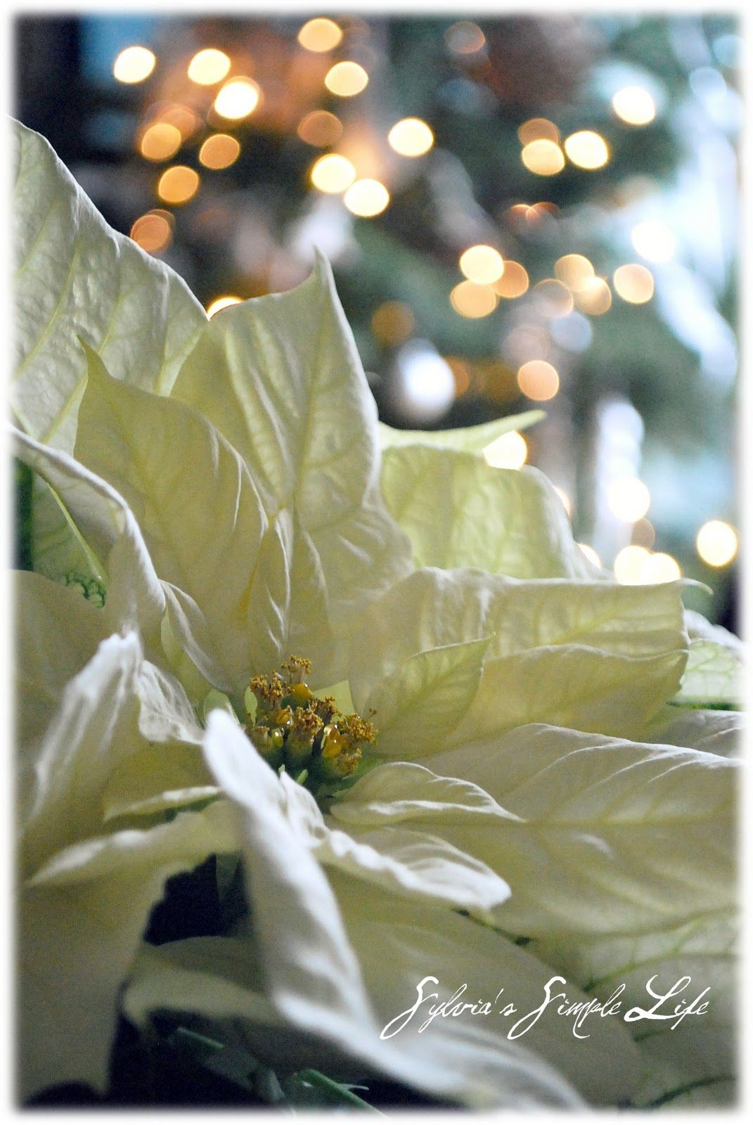 Dreaming Of A White Christmas Karen Cox Millionairess Of
