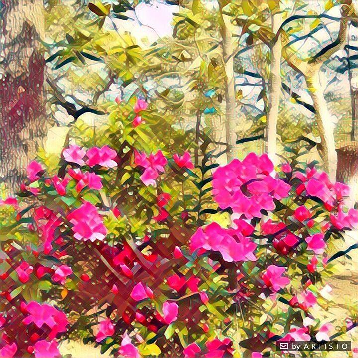 I love azaleas