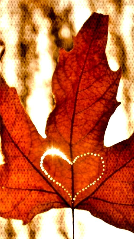Even if you are not fond of autumn, this collection of fall iPhone wallpaper photos will give you m