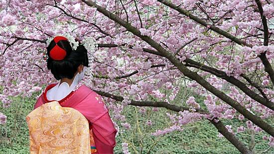 Cherry Blossom Festival In Japan Cherry Blossom Japan Cherry Blossom Cherry Blossom Festival