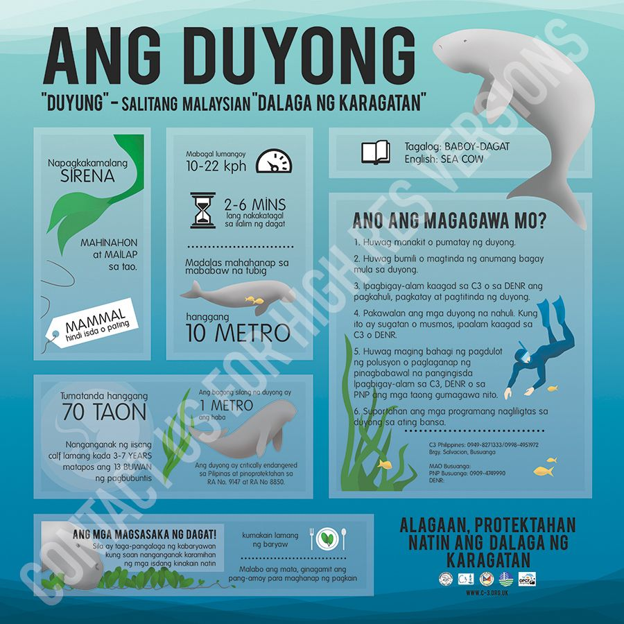 Duyong Dugong Square Poster In Tagalog By C3 For High Resolution Copies Of Our Materials Please Contact Us At Info C 3 Org Uk Dugong Sea Cow Marine