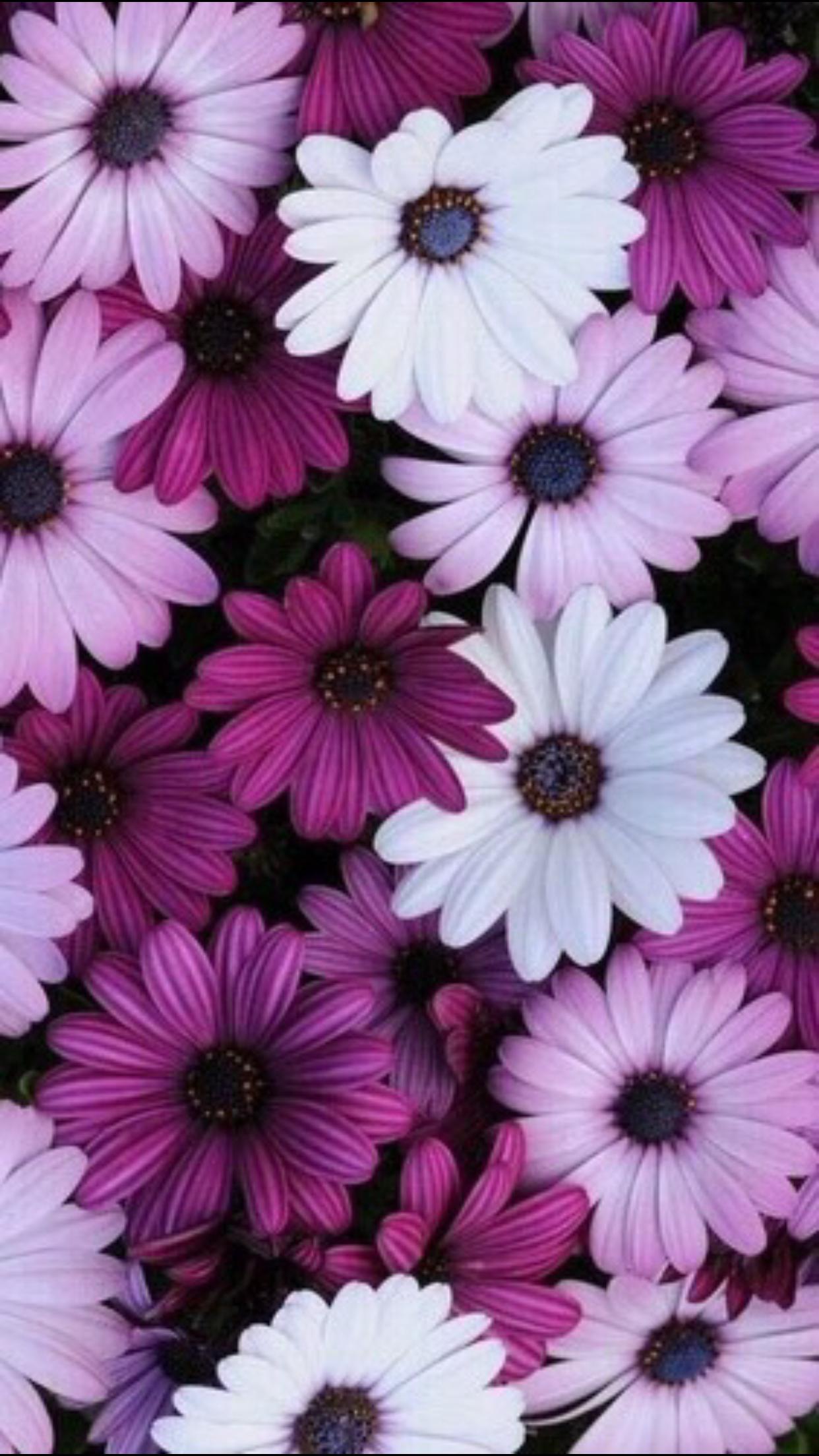 Pin de dany bautista en flor fondo pantalla celular for Imagenes de fondos bonitos