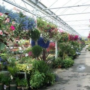 The Annual House. In the spring this area is crammed to the rafters with the most beautiful annuals and hanging baskets to brighten up your home or garden.