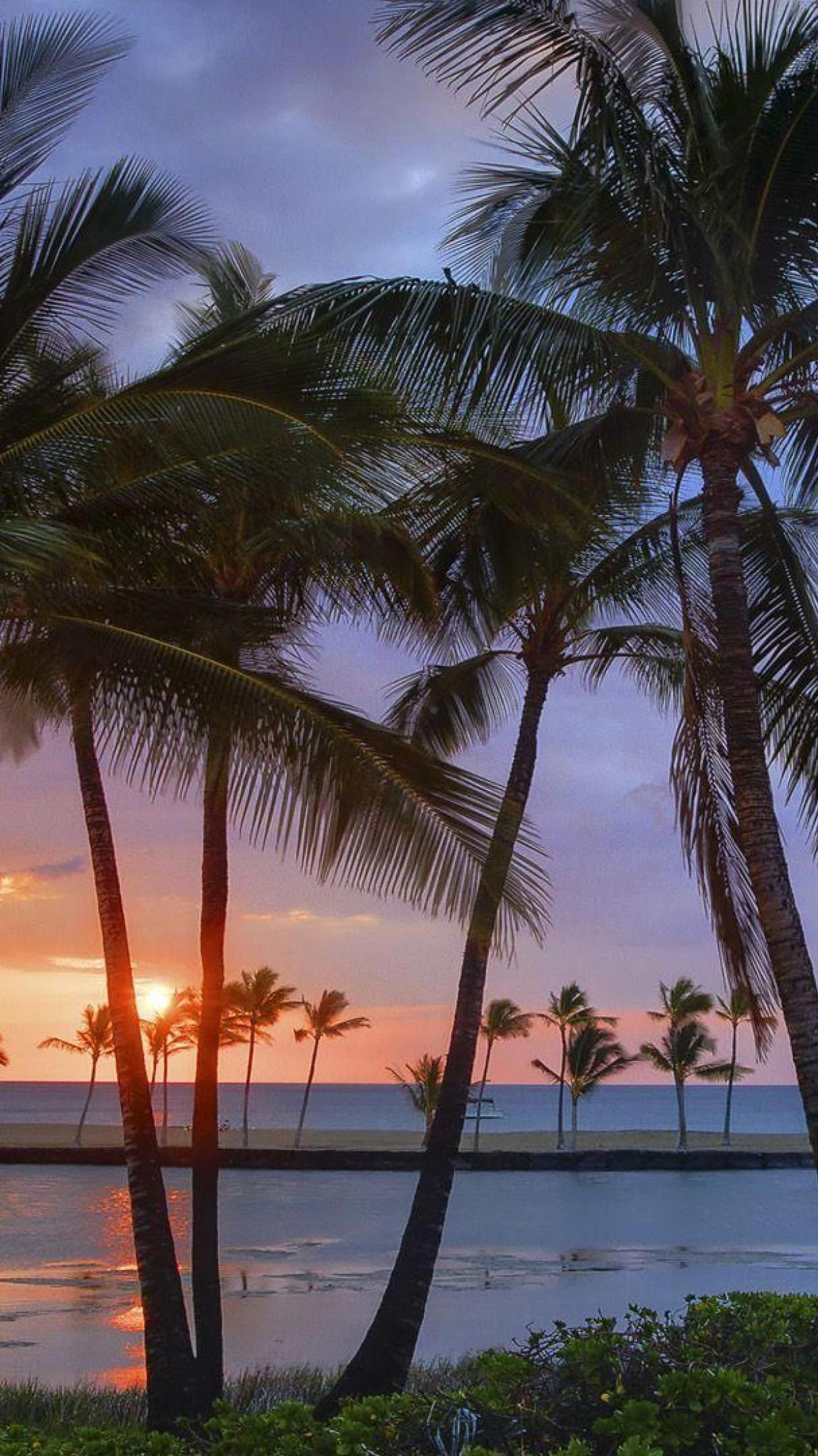 1242x2208 Hawaiian sunset Sunset USA Hawaii Beaches Palm