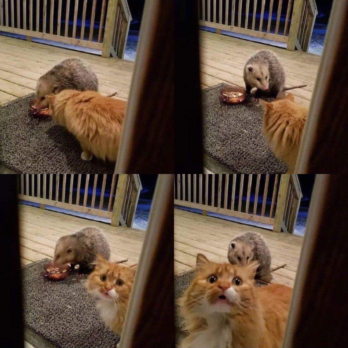 Poor Cat Semuanya Lucu Kucing Lucu