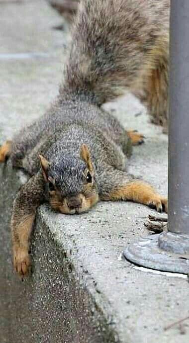 I tired!