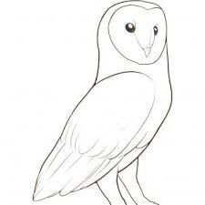 Image result for pinterest drawings birds | Owls drawing ...