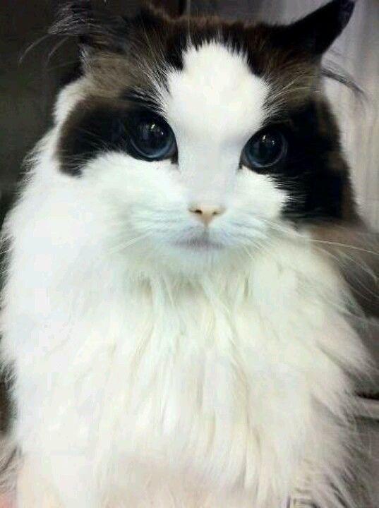 What markings, what eyes