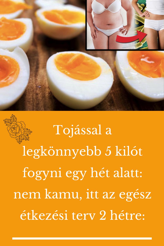 fogyni napi 5 étkezés)