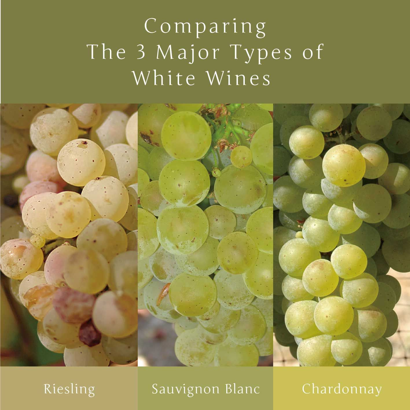Comparing The 3 Major Types of White Wines  3大 白ワイン品種 飲み比べフェア