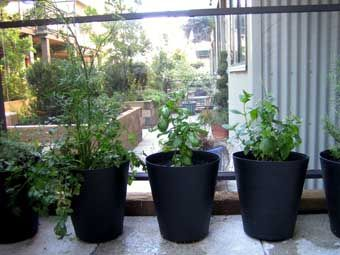 Fniss wastepaper basket from ikea used as planters. - I tried this on