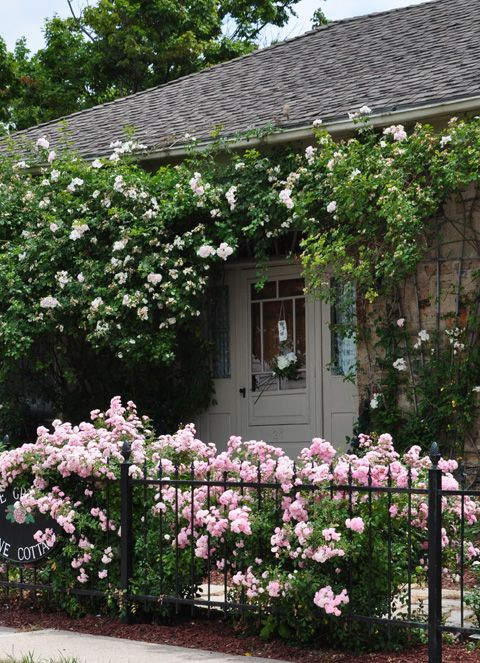 Three Dogs in a Garden: A Rose Covered Cottage, Waterdown Ontario
