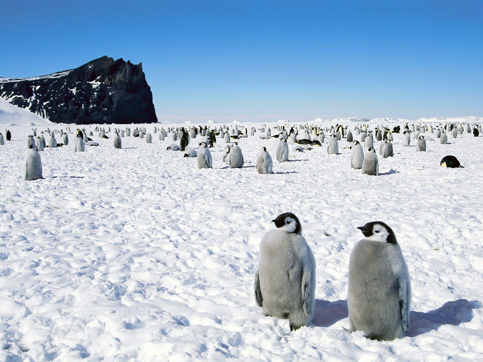 Frozen Antarctica and penguin Wallpaper HD Wallpapers