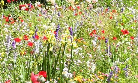 Las flores herbáceas es una especie típica del ecosistema fluvial.