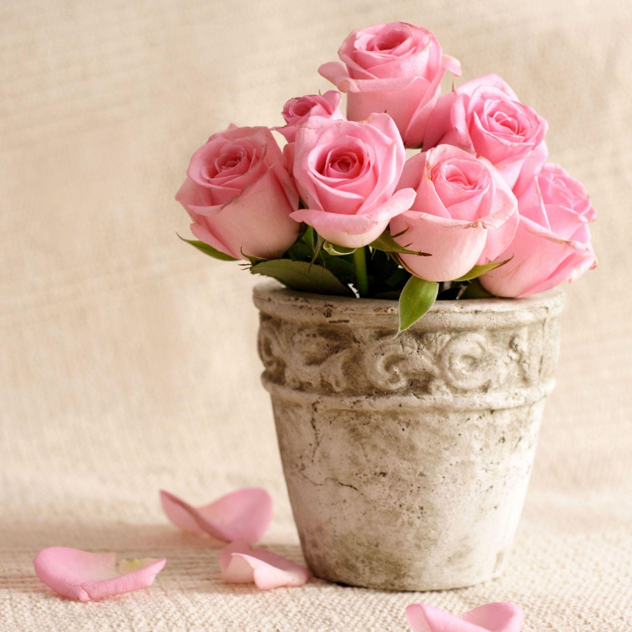 Pink Flowers Wallpaper: Download Wallpaper 2048x2048 Roses, Flowers, Pot, Petals