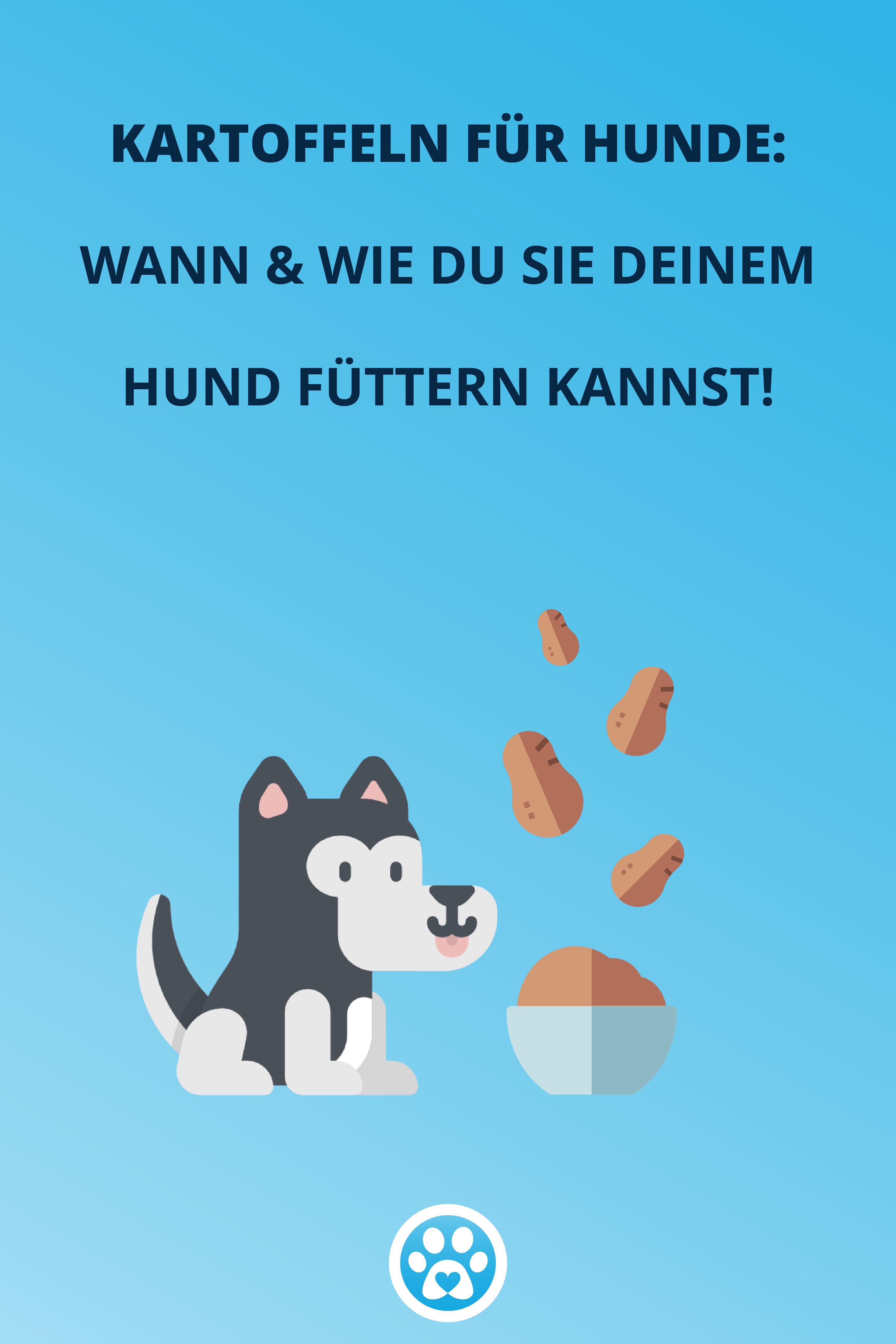 4 Tipps Wann Es Sinn Macht Deinem Hund Kartoffeln Zu Futtern Hunde Giftig Fur Hunde Welpen