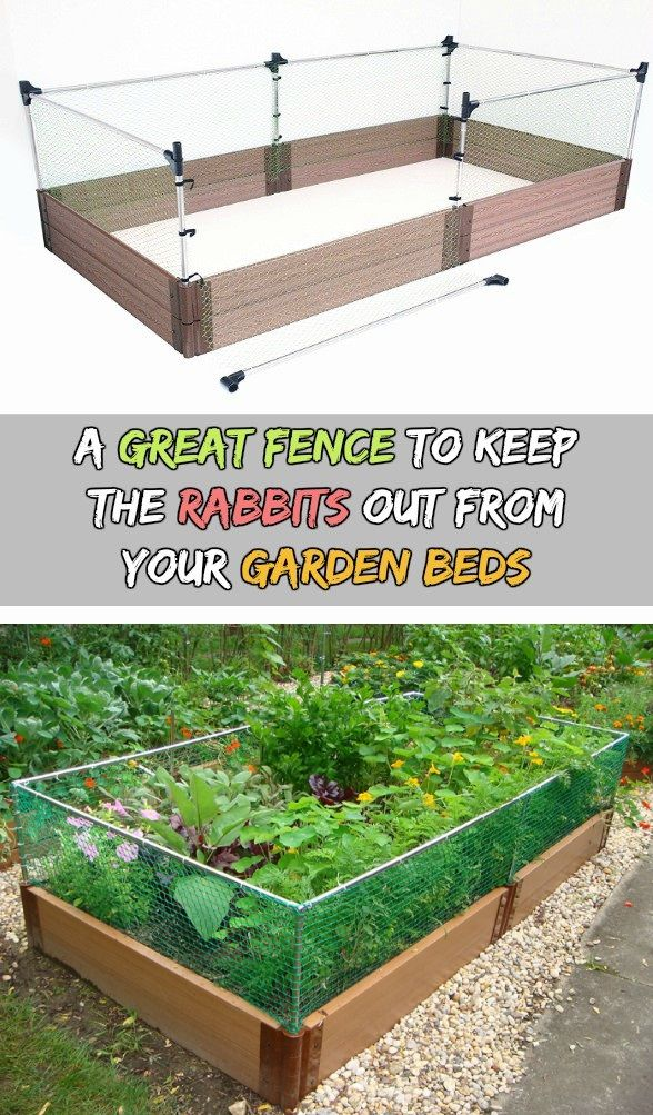 A Great Fence To Keep The Rabbits Out From Your Garden Beds Vegetable Garden Raised Beds Garden Beds Rabbit Fence
