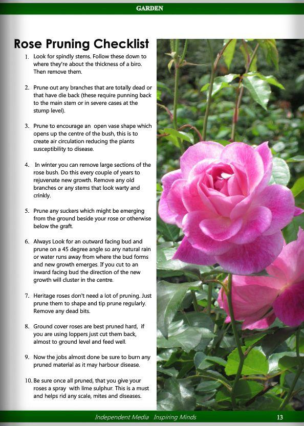 Garden Vol 1 No 2 Garden Rose Gardening Tips