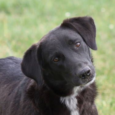 Border Collie Lab Looks Just Like Jayda Kittens And Puppies Dog