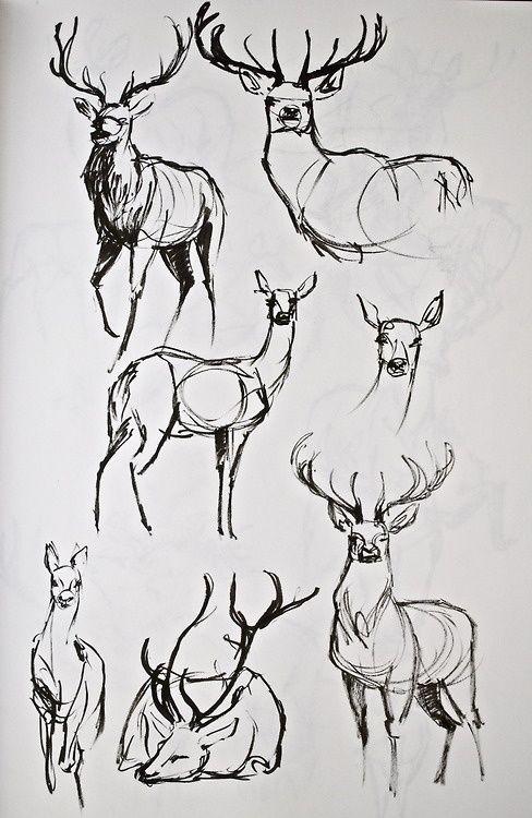 Pingl par caroline pariente sur dessin animalier esbo os de animais desenhos corpo et fazer - Dessiner un cerf ...