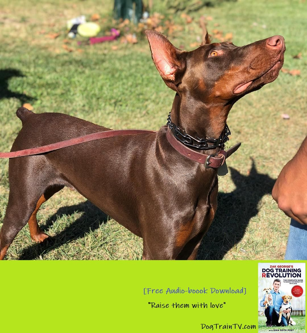 Look At This Stunning Young Dog Had A Great Session With Kiloh The