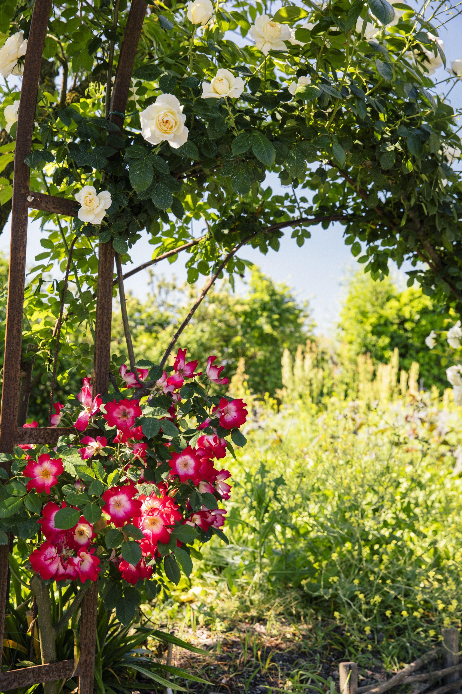 La Nature Est Une œuvre D Art Dans Le Jardin De La Chassagnette