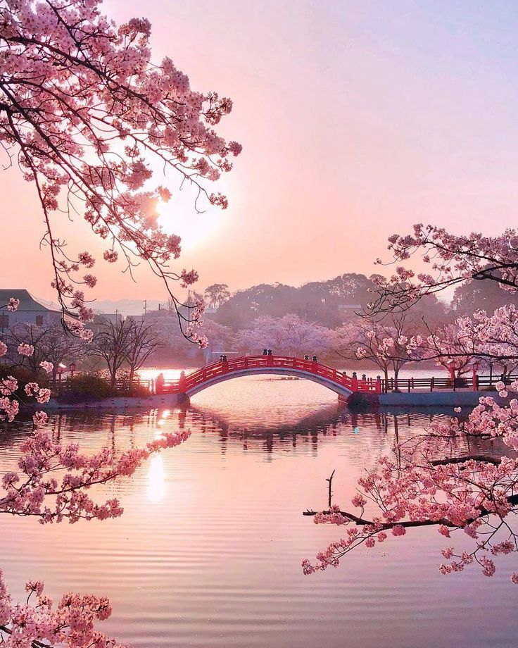"andantegrazioso: ""Pink Japan | tomo_74_ ""- #andantegrazioso #Japan #nature ... ,  #andantegrazioso #japan #nature"