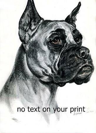 Dogs An Album Of Drawings Boxer Collie Cocker Saint Bernard Bull 12 Animal Art Artist Sketches Dog Sketch