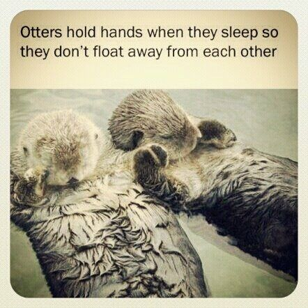 otters = love.