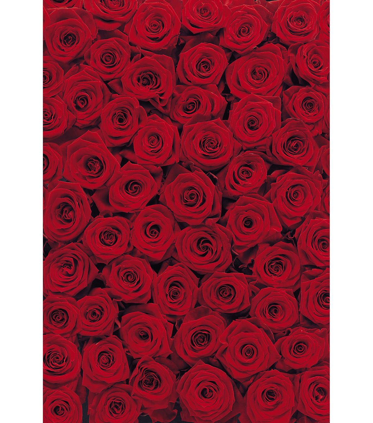 roses wall mural wall murals and walls roses wall mural