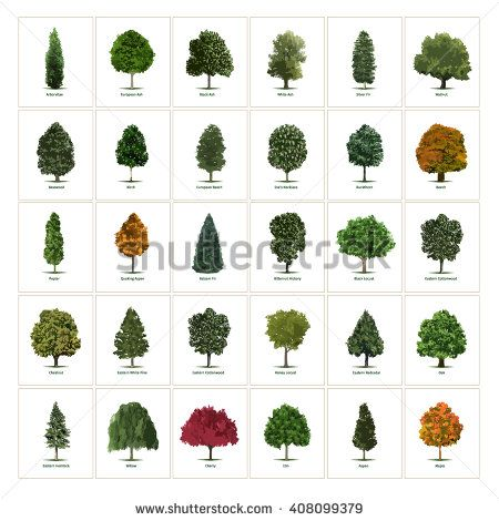 Thirty Different Vector Tree Illustrations Tree Types