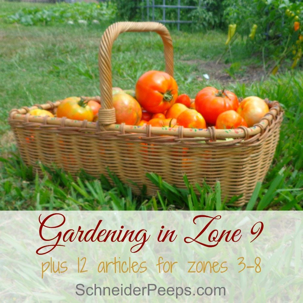 gardening in zone 9 plus tips for other zones plants gardens