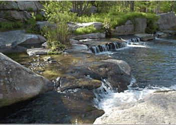 cef6822a17856cc794170d524e3b9f90 - Anthony Archer Wills Designing Water Gardens