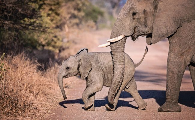 Proud Elephant Mother Surprises Former Rescuers With Her New Baby | Care2 Causes