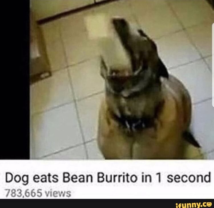 Dog Eats Bean Burrito In 1 Second Ifunny Funny Dog Memes Funny Memes Funny