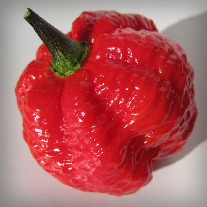 be724a05dad5 The 7 Pot Brain Strain was developed using selective breeding by saving  pods from plants that would produce a lumpy