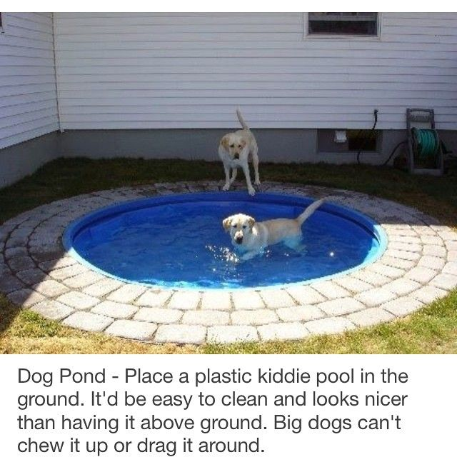 doggie pool outdoor patio pinterest. Black Bedroom Furniture Sets. Home Design Ideas